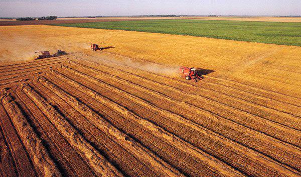 粮食定价体制改革不可松劲