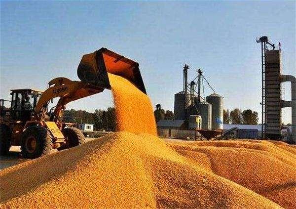 国粮局:主产区秋粮收购同比增加447万吨