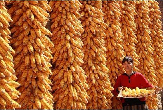 分析师:春节前玉米价格坚挺 是否出售看个人规划