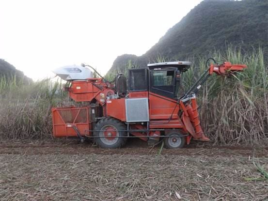 海南正式试行甘蔗收获机械化