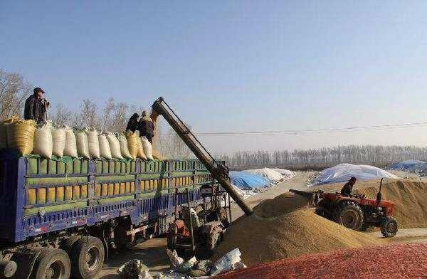 2017年我国收购粮食8500亿斤