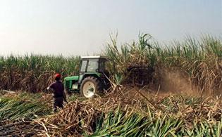 柳工搞甘蔗收获机需要耐心