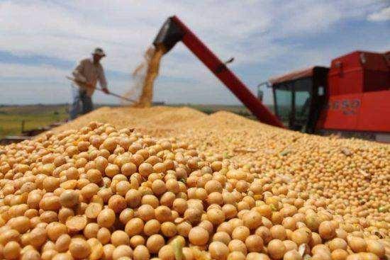 美大豆如被加税会怎样?有替代产品对中国影响有限