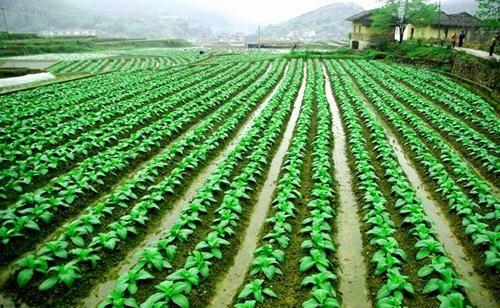 农业调整重在优化经营结构