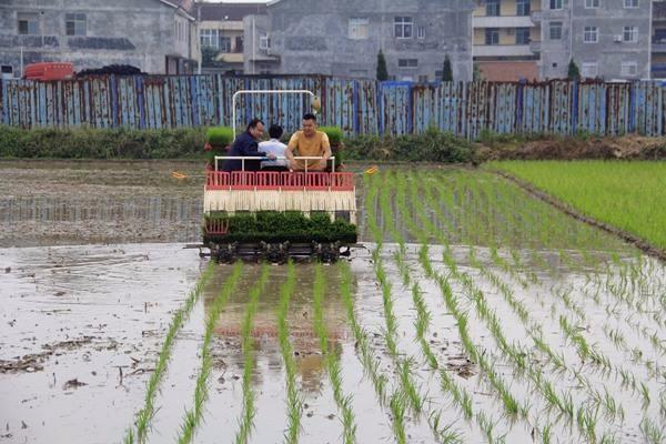 今年种什么?调减水稻成焦点!