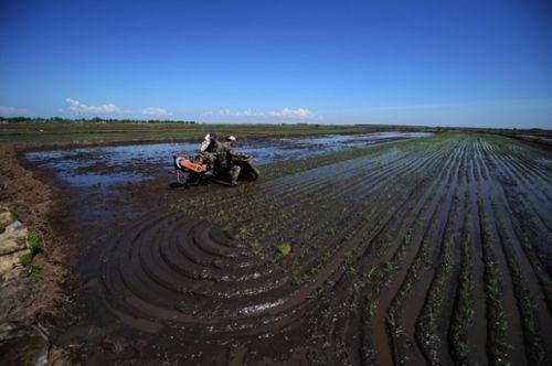 吉林省五月底旱田播种水田插秧全部结束