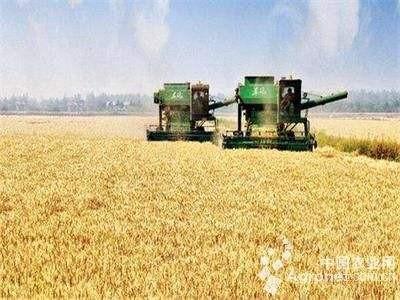 农业生产托管:让专业的人解决种好地的问题