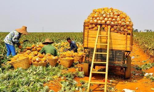 """让农民种植优质农产品不能""""想当然"""""""