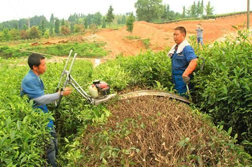 四川省关于阿克苏大宇机械有限公司违规执行农机购置补贴政策的通报