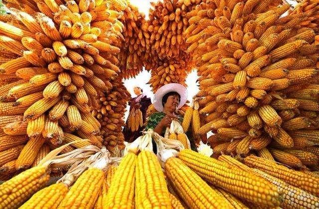 农业农村部谈首设中国农民丰收节:让传统农耕文化活起来