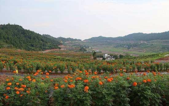 产业融合是实现农业高质量发展的关键