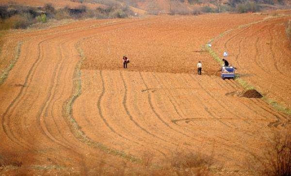 农业农村部司长张红宇:粮食是大国重器 耕地红线任何情况下都不可逾越