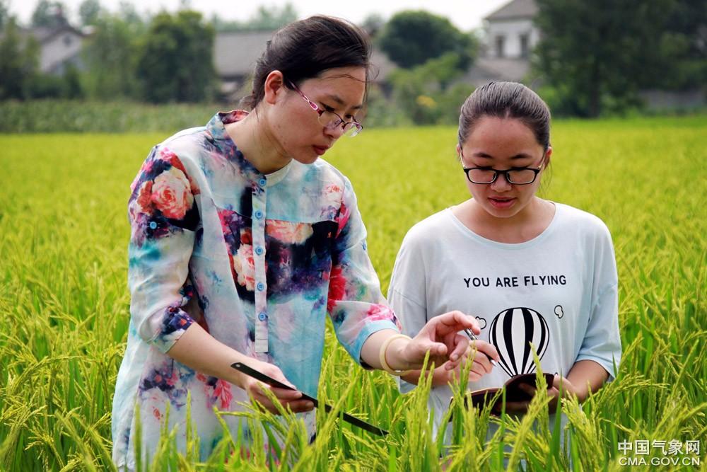 气象专家:秋粮作物进入生长关键期 需加强防控病虫害
