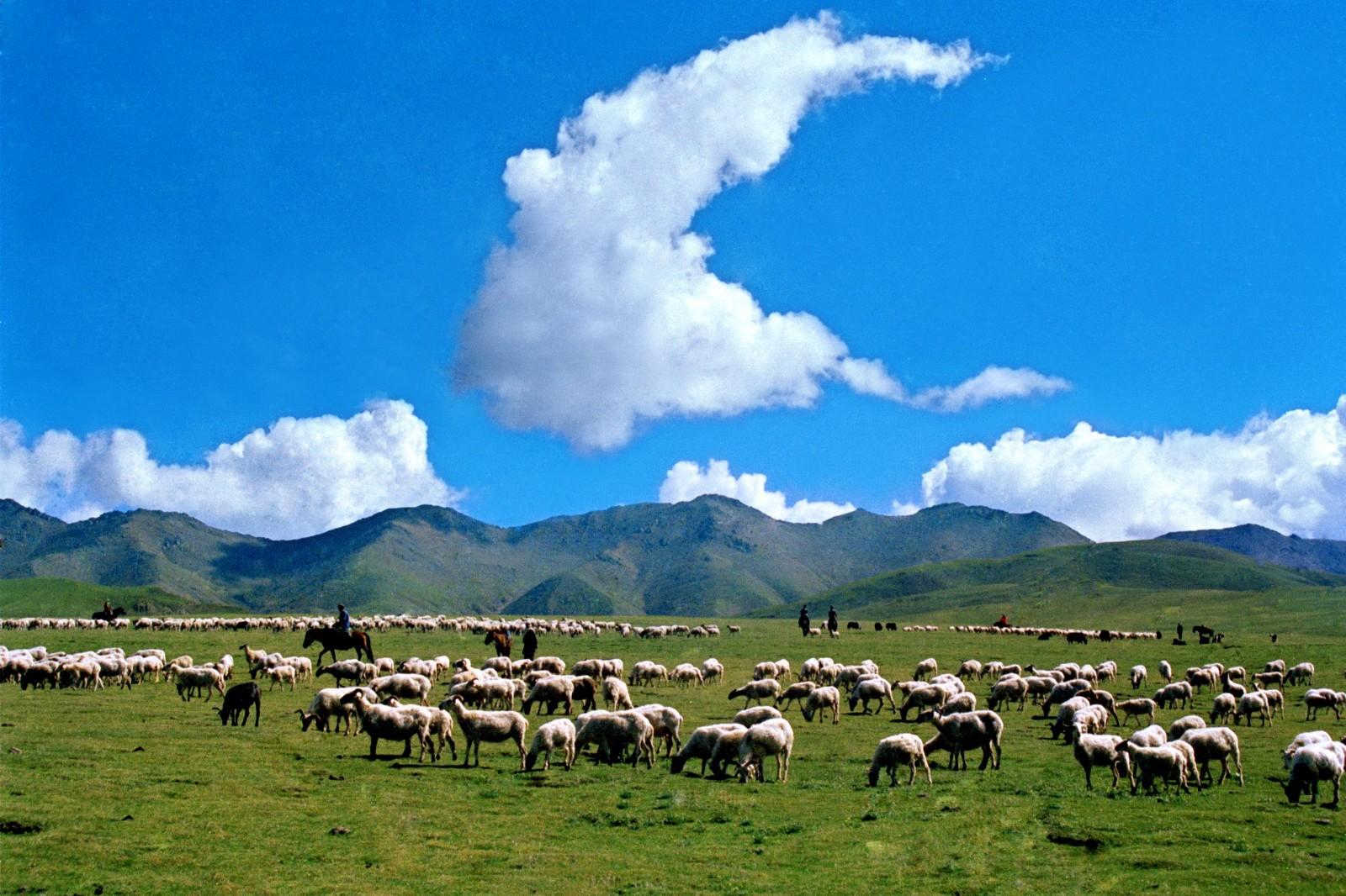 上半年畜牧业生产形势总体向好 畜产品供应充足
