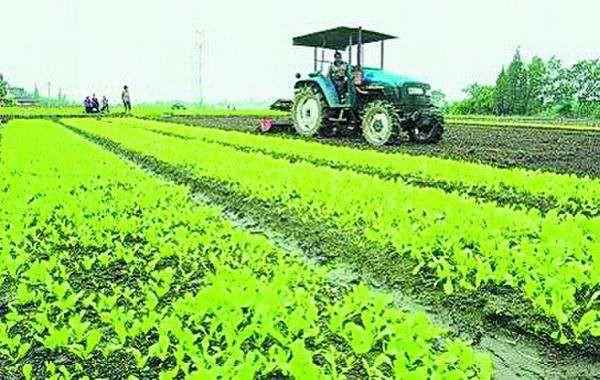 农业农村部:大力培育新型农业经营主体