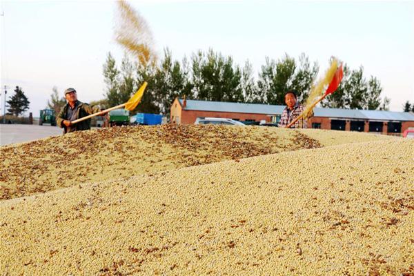 黑龙江龙镇农场:大豆抢收忙