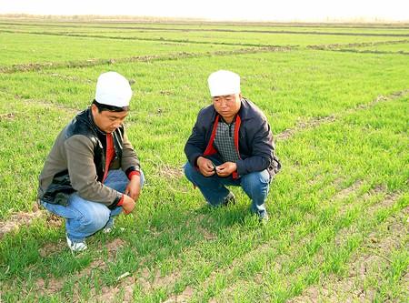 2018—2019年度小麦秋冬种植技术指导意见