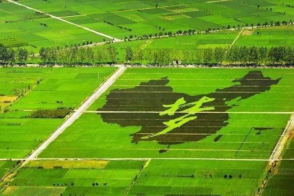 农业农村部办公厅关于印发《乡村振兴科技支撑行动实施方案》的通知