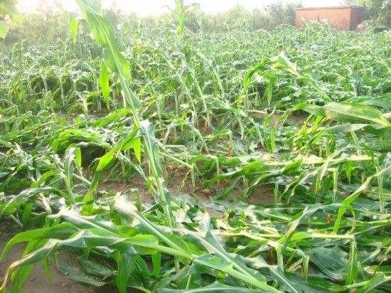 前三季度我国农作物受灾面积19120.2千公顷