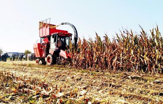"""""""农机大王""""今年种地7000亩,年纯收入达100余万元。"""