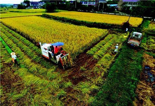 """农、财两部推进农业""""三项补贴""""改革,促进农业绿色发展"""