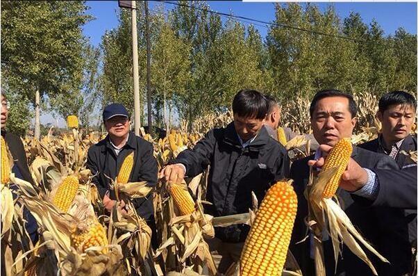 北方春玉米生产全程机械化推进活动现场
