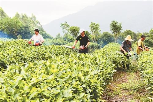 广西关于调整双人平行式茶树修剪机补贴额的通知