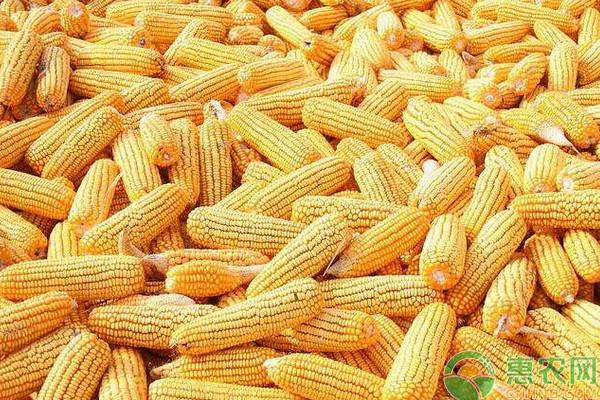 当前玉米价格走势如何?今日玉米主产区最新价格行情