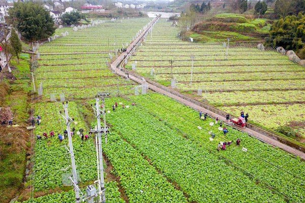 多地新型职业农民成脱贫攻坚农业转型主力军