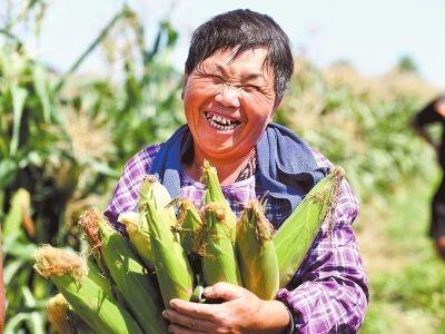 农民种粮不易,怎么种粮才能挣钱?