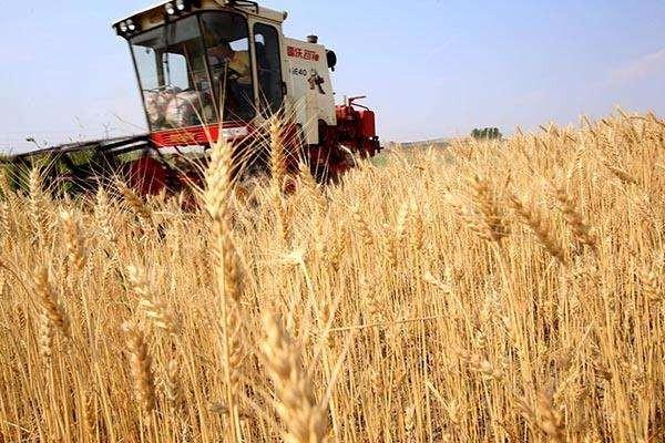 2019年每斤微降0.03元 小麦最低收购价微调影响不大