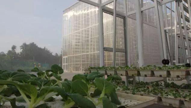 迪拜要建全球最大的垂直农??!18亩相当于耕地5400亩的产量!
