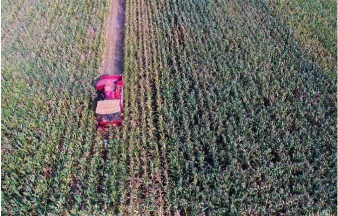 """《新观察》短评:玉米收获机市场进入竞争""""新时代"""".png"""