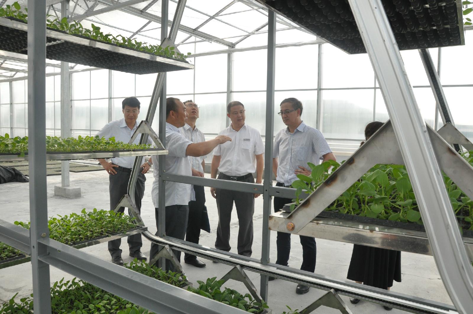 蔬菜立体系统.JPG