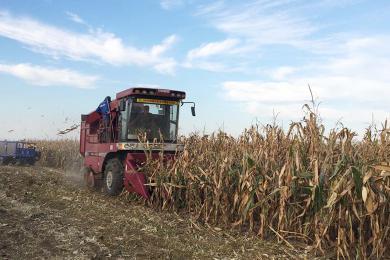 走入勇猛玉米场