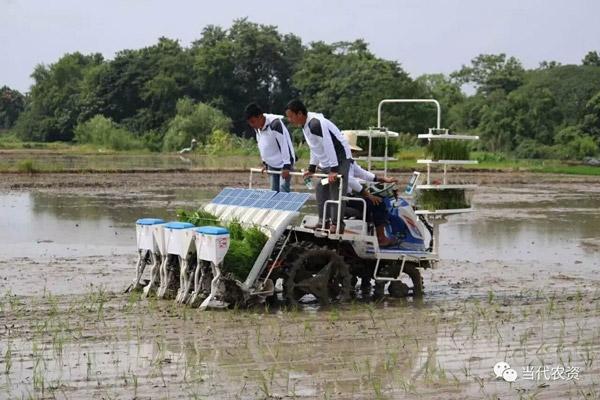 龙舟2FH-8型水稻插秧同步精量施肥机