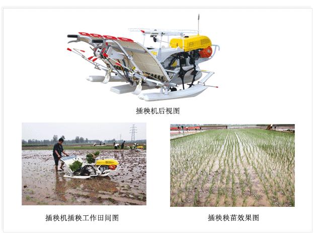 華盛泰山2Z-430水稻插秧機