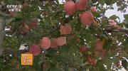 苹果园的水肥一体化