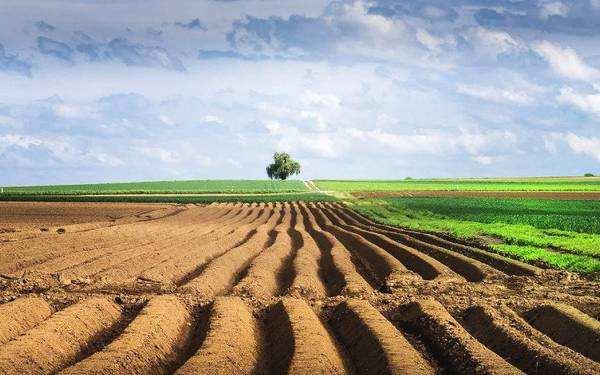 土地经营权入股发展农业产业化经营 激发乡村振兴新动能