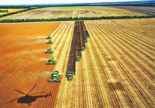 种植面积调减,粮食安全咋保障?