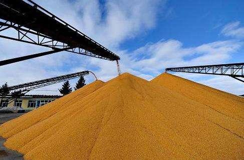 我国即将开展政策性粮食库存数量和质量大清查