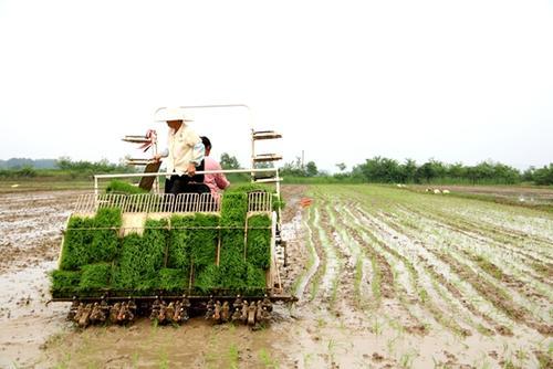 广东省加快推动水稻机械化种植水平提升
