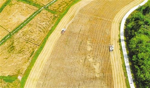 【图片】天气晴好收麦忙