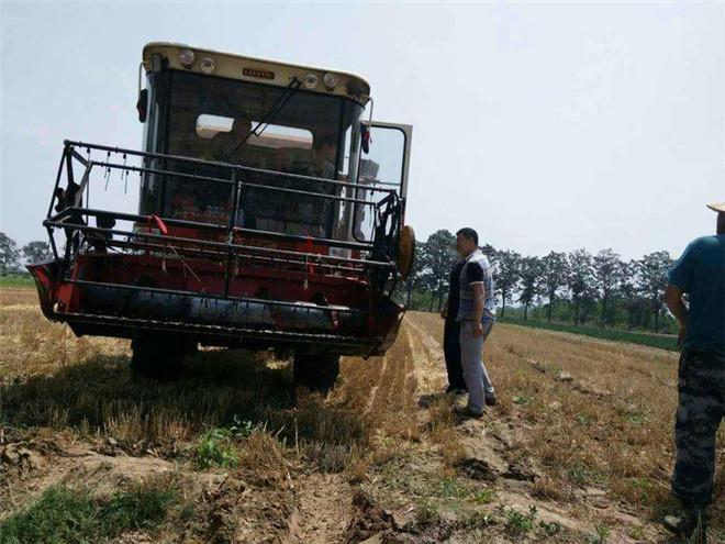 陕西麦收过半 预计总产422.2万吨
