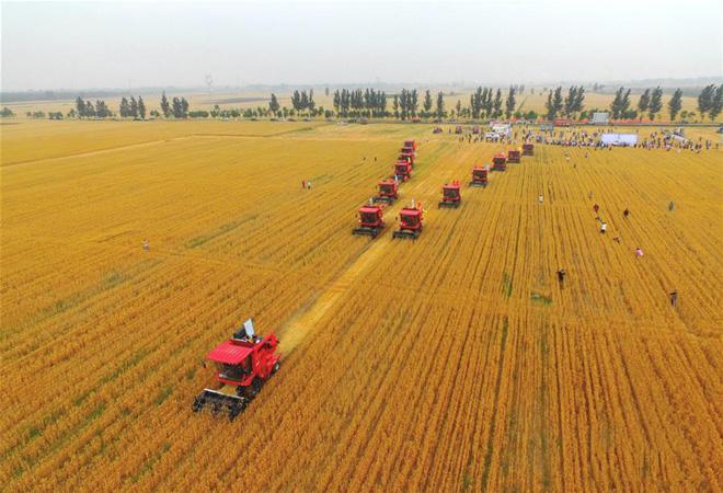 """""""小麦丰收了,我们机手干活也带劲!"""""""