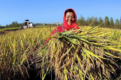农业农村部要求:坚持不懈抓好秋粮生产,努力夺取全年粮食丰收