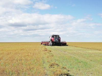 """""""一带一路""""农业合作迈向""""工笔画""""时代"""