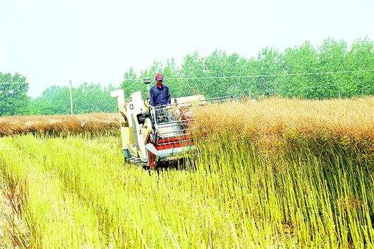 湖北举办油菜轮作试点农机化技术观摩培训