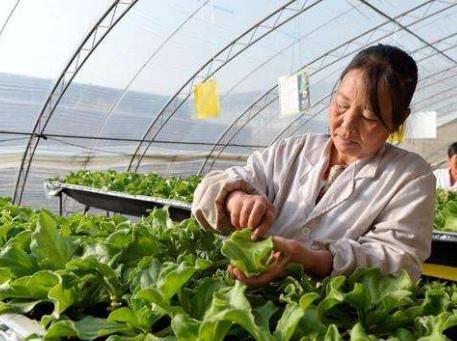 增加120个农民合作社提升整县推进试点