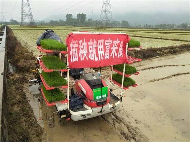 富来威水稻密播稀植技术湖北试验增收228.5元/亩